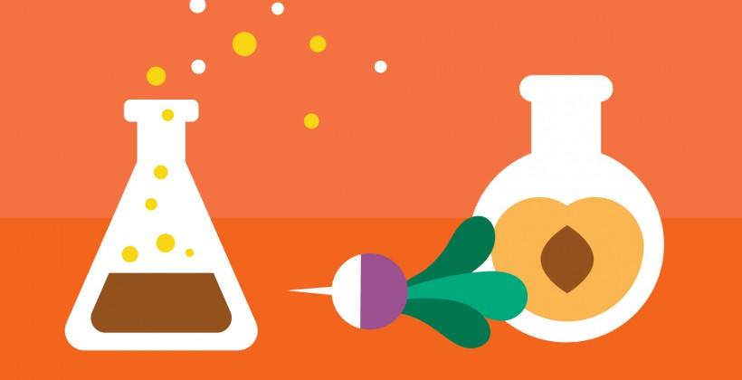 Wissenschaftliche Begründung: Eine grundlage für funktionelle Lebensmittel und gesundheitsbezogene Aussagen