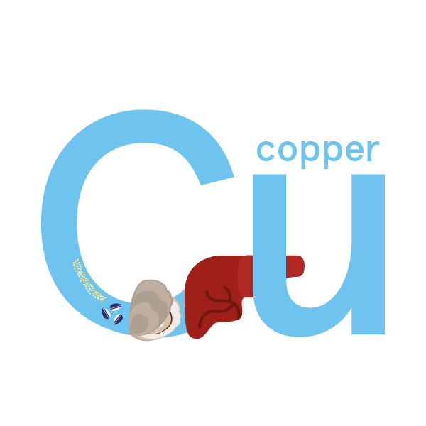 Copper: foods, functions, how much do you need & more