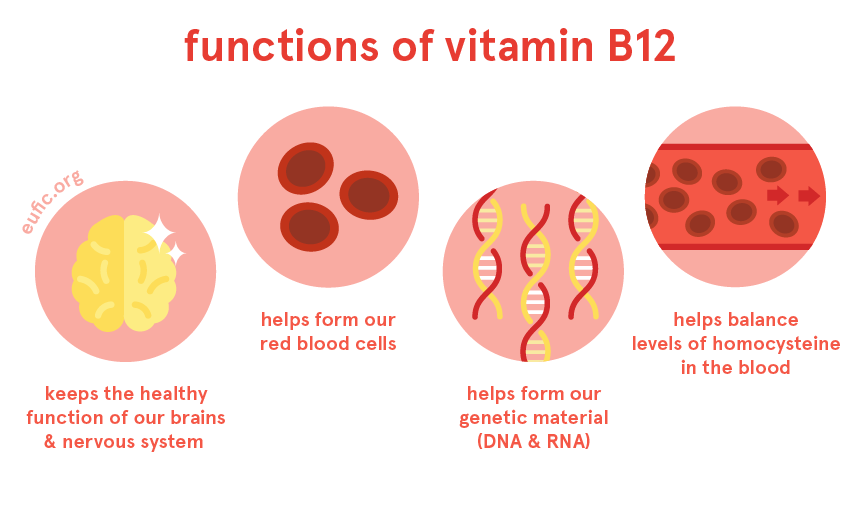 Functions of vitamin B12