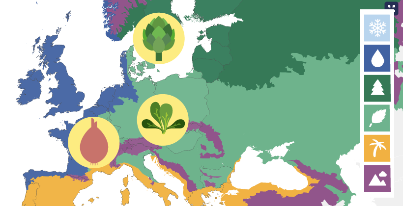 Explore Seasonal Fruit and Vegetables in Europe