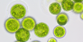Sustainability at the cutting edge: EIT Food-funded FutureKitchen showcases algae plant with negative emissions in latest VR video