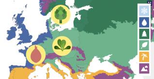 Explore Seasonal Fruit and Vegetables in Europe
