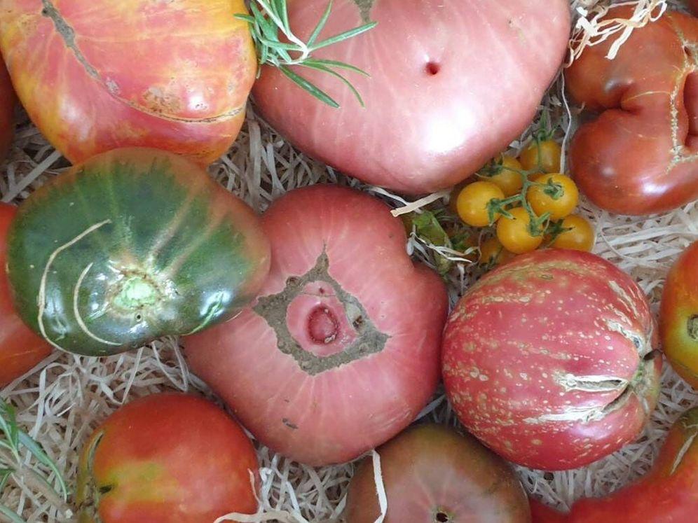 ¿Sabes reconocer un buen tomate, de los de antes?