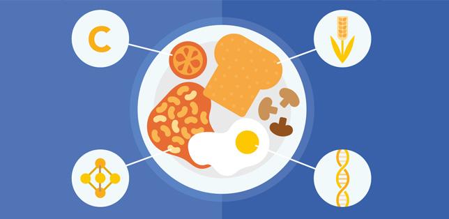 ¿Qué contienen los alimentos?