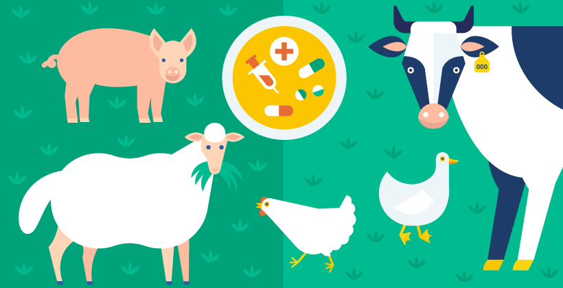 Fields of innovation: How technology ensures farm animal health and welfare in food production