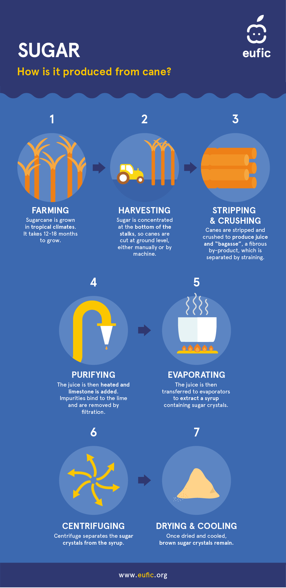how to produce sugar from cane