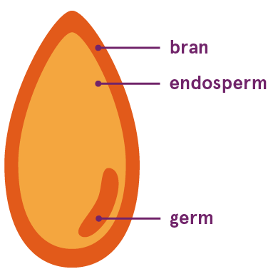 whole grain cross section