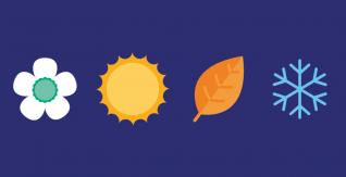 La frutta e la verdura di stagione sono migliori per l'ambiente?